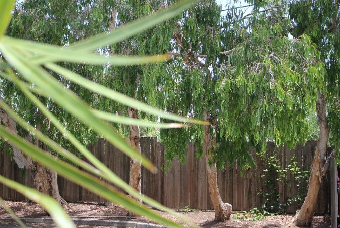 Kurilpa garden