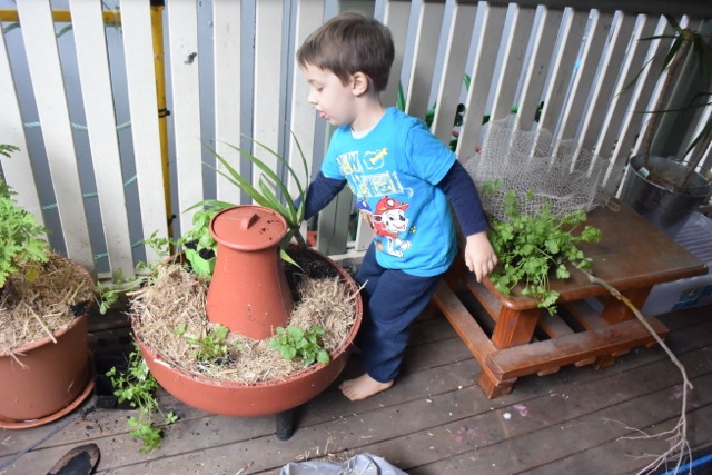 Junior Kindy - Veranda Garden and Worm Farm 2