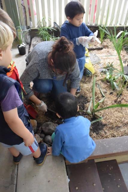 Junior Kindy - Veranda Garden and Worm Farm 5